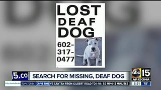 Search is on for missing deaf dog - Video
