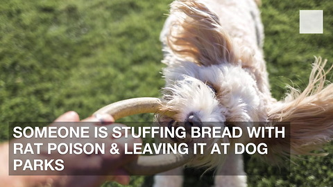 Someone Is Stuffing Bread with Rat Poison & Leaving It at Dog Parks