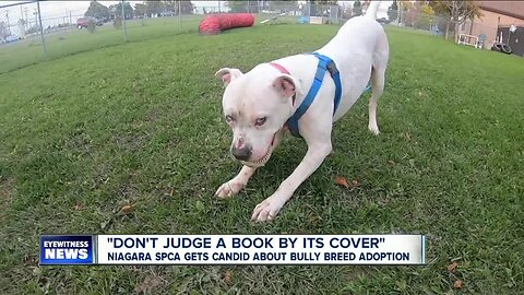 "Niagara SPCA gets candid about ""Bully Breed"" dog adoption"