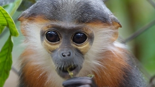 Meet the Cute Inhabitants of the Endangered Primate Rescue Center - Video
