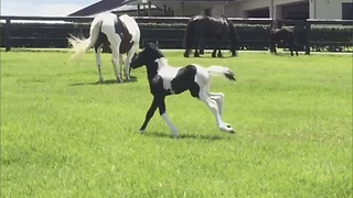 Cute baby horse turns into majestic steed  - Video