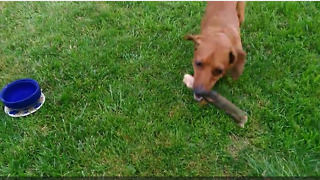 Frustrated dog play fetch with lazy owner