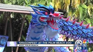 'Dragonfest' held at Palm Beach Zoo - Video