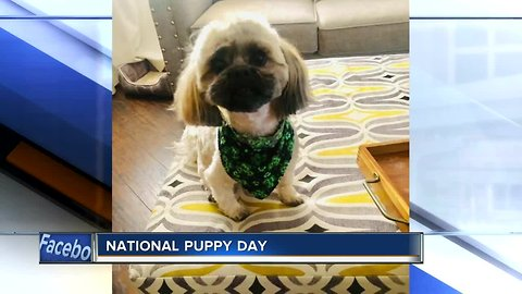 National Puppy Day Viewer photos on NBC26