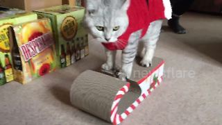 Cute cats in Santa suits get excited over Christmas presents - Video