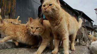 Japanese Cat Island - Video