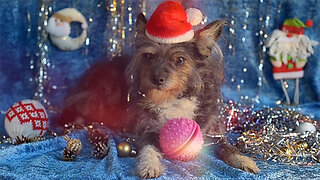 Do Not Give Your Dog These Foods During the Holidays