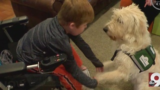 Cincinnati boy with Duchenne muscular dystrophy faces uncertainty with man's best friend at his side - Video