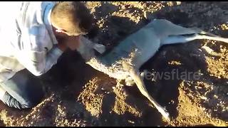 Man performs mouth-to-mouth resuscitation on drowned deer - Video