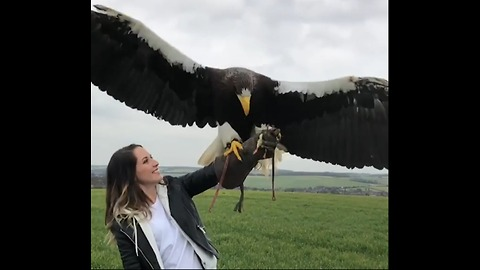 Look At The Size Of This Eagle