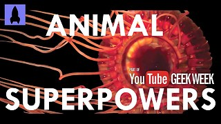 Check Out These Incredible Animals With Real Superpowers - Video