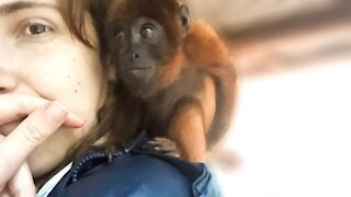 Orphaned howler monkey makes the most adorable noises