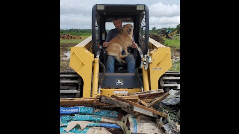 Cattle dog joins owner for a day of work in a skidsteer