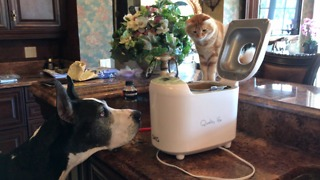 Great Dane and Cat are Fascinated by SKG Bread Maker  - Video