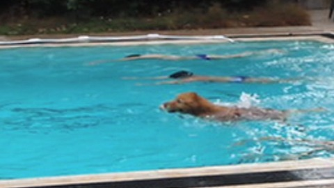 Amazing Dog Wins A Swimming Race Against Humans!
