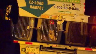 164 dogs seized in Sandy Valley by authorities in animal cruelty investigation - Video