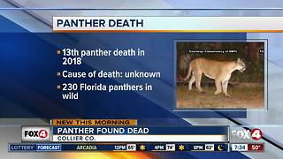 Florida panther found dead in Collier County - Video