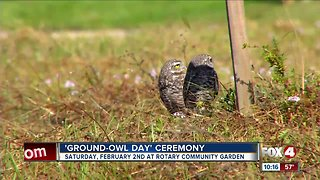 Ground owl day Cape Coral