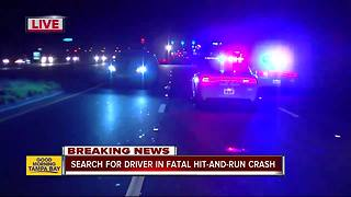 Tampa PD investigating deadly hit-and-run - Video