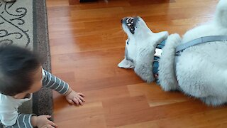 """Kid finds the """"sweeper mode"""" on his husky"""