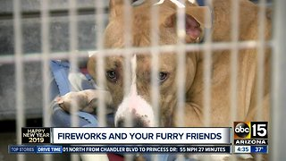 Keeping your furry friends safe during New Year's - Video