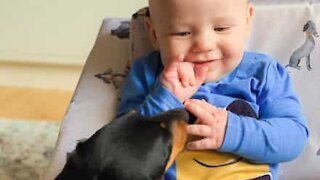 Adorable friendship between dog and baby