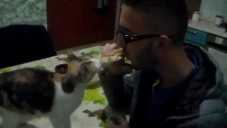Sharing a Sandwich With Your Cat Might Be a Mistake - Video