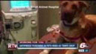 Antifreeze poisoning in pets rises as temperatures drop - Video