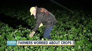 Farmers in Florida worried about crops as freeze warnings impact Tampa Bay Area - Video