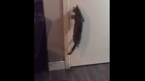 Clever cat figures out how to open doors