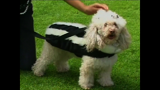 Designer Dog Clothes - Video