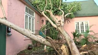 West Palm Beach neighborhood deals with three trees blocking streets. - Video