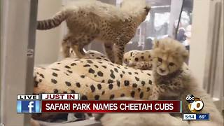 San Diego Zoo Safari Park announces cheetah cub names - Video