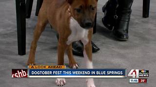 Dogtoberfest this weekend in Blue Springs - Video