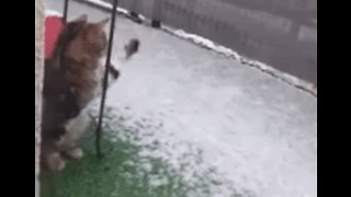 Curious Cat Tries to Catch Snow as Cold Weather Sweeps South-Central France - Video