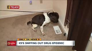 K9s sniffing out drugs hidden inside family homes - Video