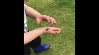 Fearless toddler picks up massive spider