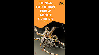 Top 4 Facts About Spiders *