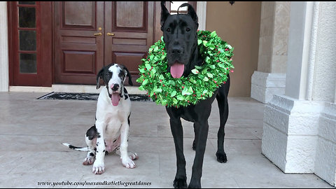 Puppy poses with Great Dane for first ever Christmas photo