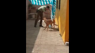 Dog hugs police office after being freed