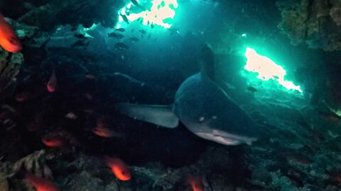 Intimidating sharks block scuba divers' exit from underwater cave