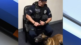 Port St. Lucie K-9 retiring - Video