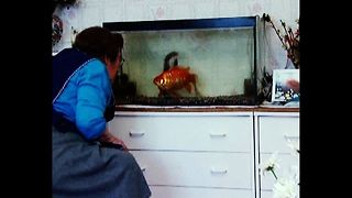 MASSIVE Goldfish - Video