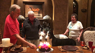 Family sings Happy Birthday to their Great Danes  - Video