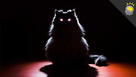 Stuff to Blow Your Mind: Creepy Cat Eye Glow - Science on the Web