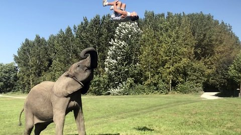 'El of a lot of fun! Circus trainer shows off elephant's incredible tricks – and insists animal is happy and they have 'perfect trust' for each other