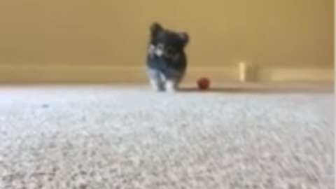 Dog Responds To Chips Opening In The Most Adorable Way