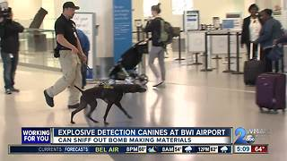 Bomb-sniffing dogs checking travelers at BWI
