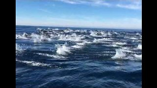 Mesmerizing Footage Shows Dolphins Swimming in Avila Beach, California