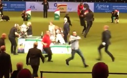 PETA Protesters Disrupt Crufts Dog Show Prize Ceremony - Video